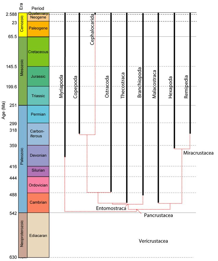 Pancrustacea GEOL 331 Principles of Paleontology