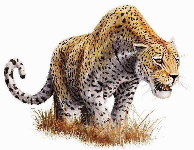 Panthera onca augusta 3bpblogspotcom7SlSb1brd78UoUDBVeBmeIAAAAAAA