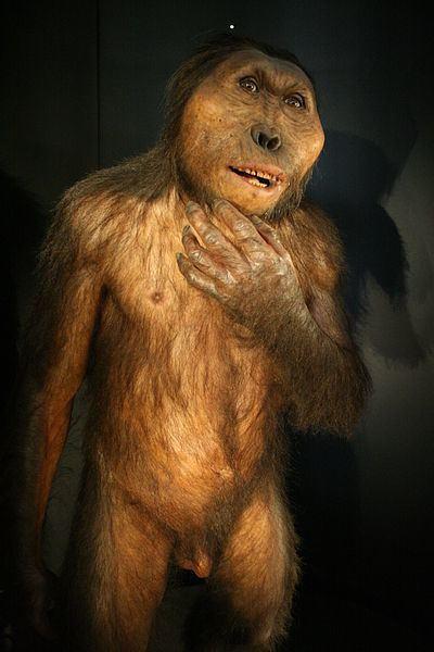 Paranthropus AustralopithecusParanthropus boisei The Young Archaeologist