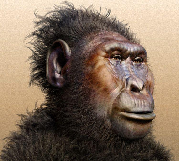 Paranthropus Paranthropus boisei 134MillionYearOld Hominin Found in Tanzania