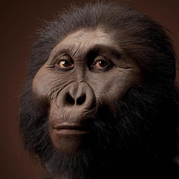 Paranthropus Paranthropus boisei The Smithsonian Institution39s Human Origins