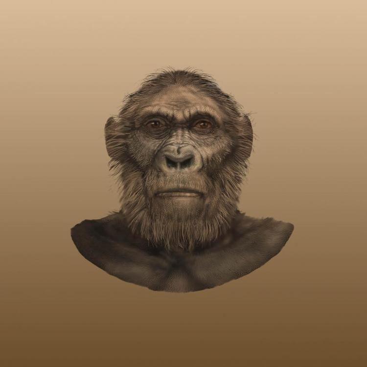 Paranthropus robustus humanoriginssiedusitesdefaultfilesstylesful