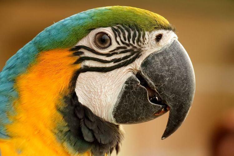 Parrot - Alchetron, The Free Social Encyclopedia