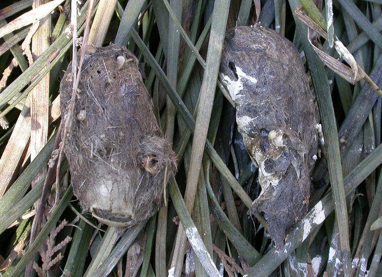 Pellet (ornithology)