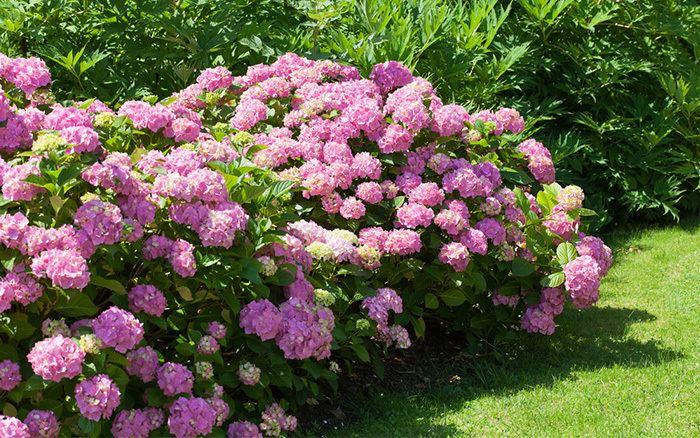 Perennial plant What does perennial biennial and annual plants mean