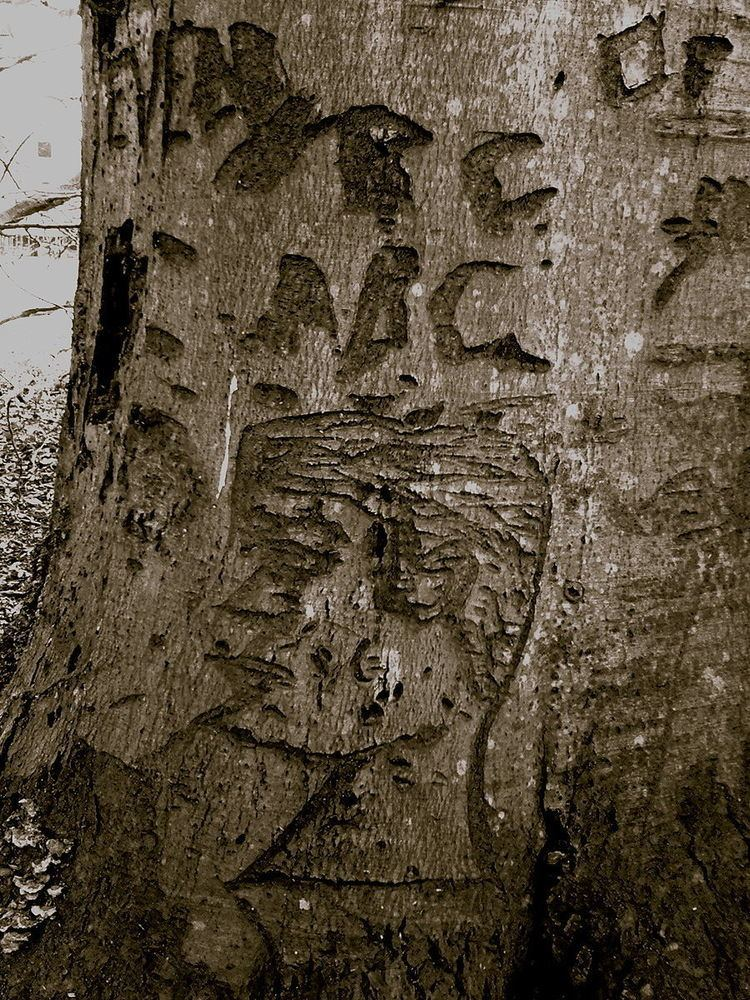 Perryville Tree engravings