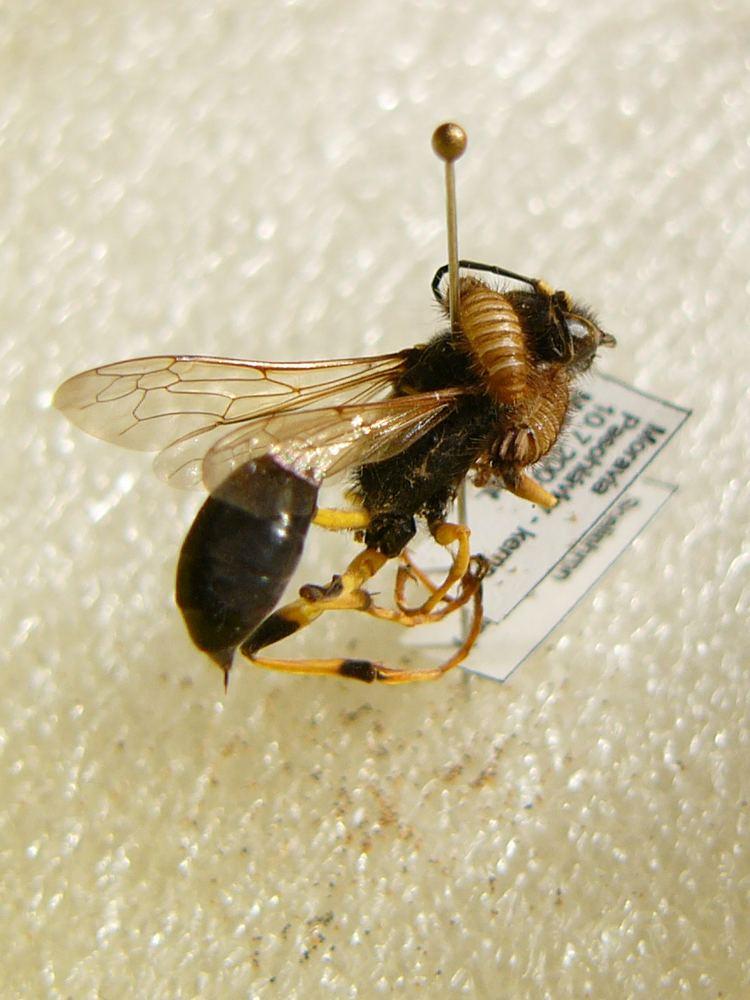 Pest (organism)