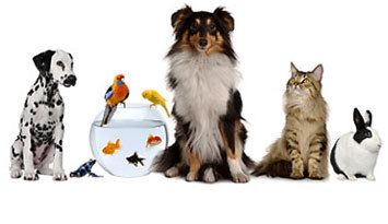 Pet Pet Food Pet Care Products Save on the Best Pet Supplies Giant Eagle