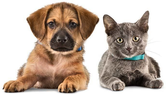 Pet Partners for Healthy Pets