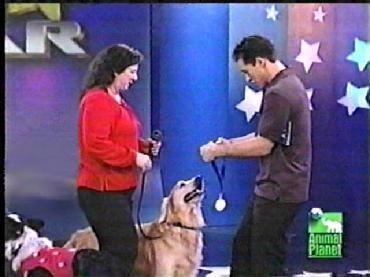 Pet Star Professional Dog Training and Pet Boarding Facility