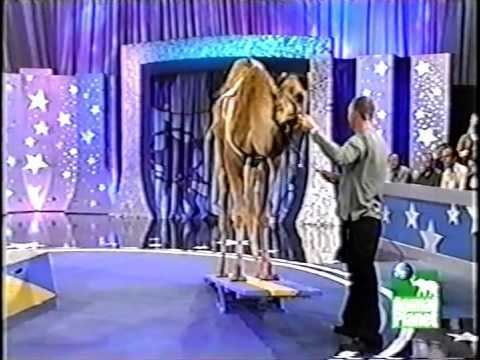 Pet Star Dan Wallen and Humphery the Camel on Pet Star YouTube