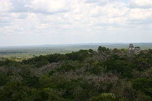 Petén-Veracruz moist forests httpsuploadwikimediaorgwikipediacommonsthu