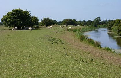 Pevensey Levels Pevensey Levels Birding Walks in RXland