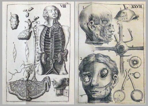 Philip Verheyen Treasures from the Rare Book Room Philip Verheyen and His Corporis