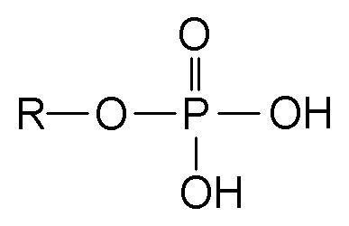 Phosphate Hypophosphatemia Wikipedia