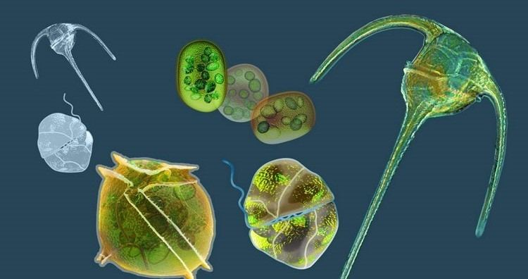 Phytoplankton C3 Colloquium Functional genetics of phytoplankton University of