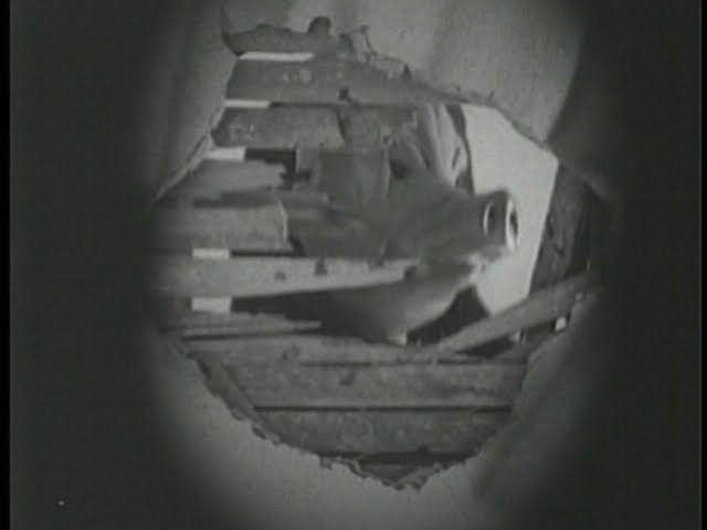 Pig (1998 film) PIG 1998 Goregasmic Cinema Swedish Independent Music