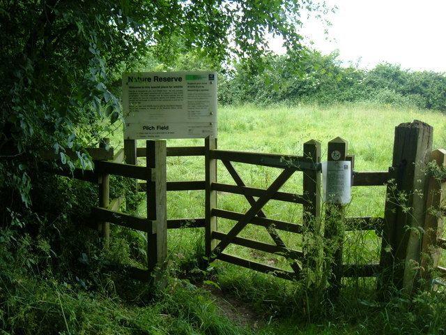 Pilch Fields