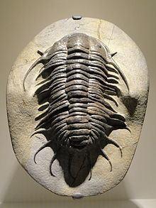Pilekiidae httpsuploadwikimediaorgwikipediacommonsthu