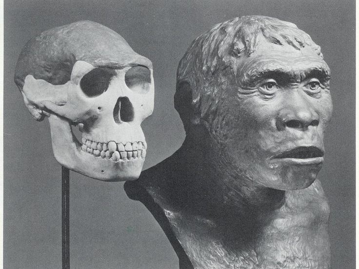 Piltdown Man 1000 ideas about Piltdown Man on Pinterest Human evolution Human