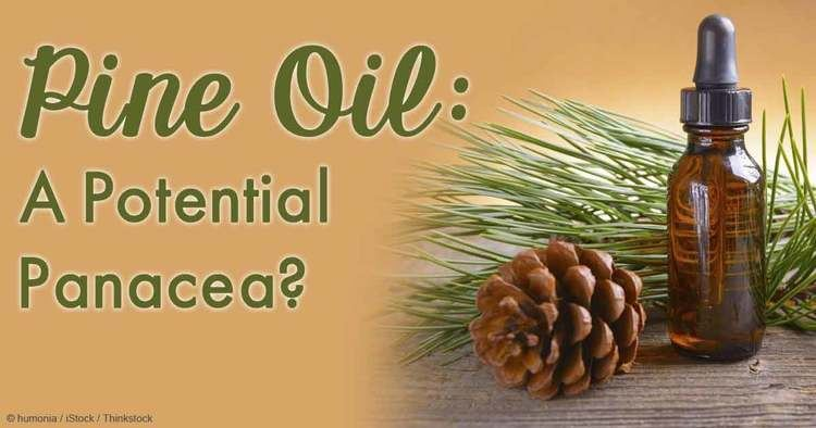 Pine oil Herbal Oil Pine Oil Benefits and Uses