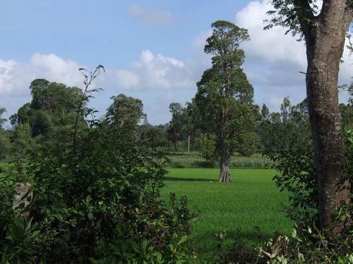 Piriyapatna Beautiful Landscapes of Piriyapatna