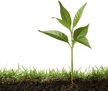 Plant Science AZ Plant Life Grades 34 Life Science Unit