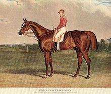 Plenipotentiary (horse) httpsuploadwikimediaorgwikipediacommonsthu