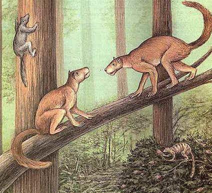 Plesiadapiformes - Alchetron, The Free Social Encyclopedia