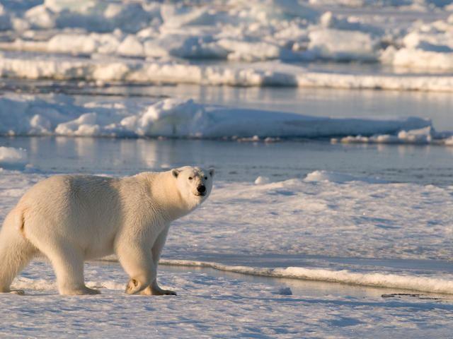 Polar regions of Earth httpsc402277sslcf1rackcdncomphotos1559im