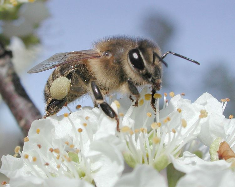 Pollination management