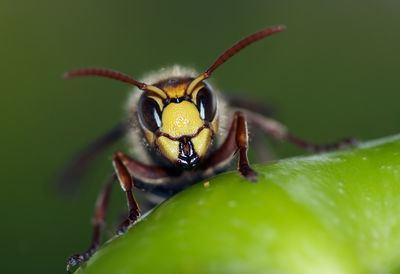 Polybia paulista Equal right to life Brazilian wasp venom kills cancer cells