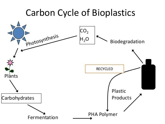 Polyhydroxyalkanoates bioplastics by microorganisms Polyhydroxyalkanoates And Polyhydroxybu