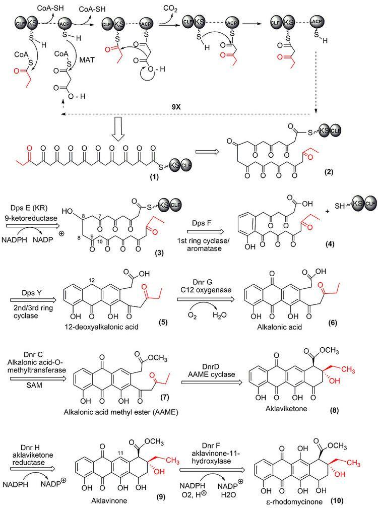 Polyketide synthase