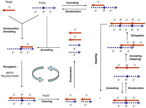 Polymerase-endonuclease amplification reaction