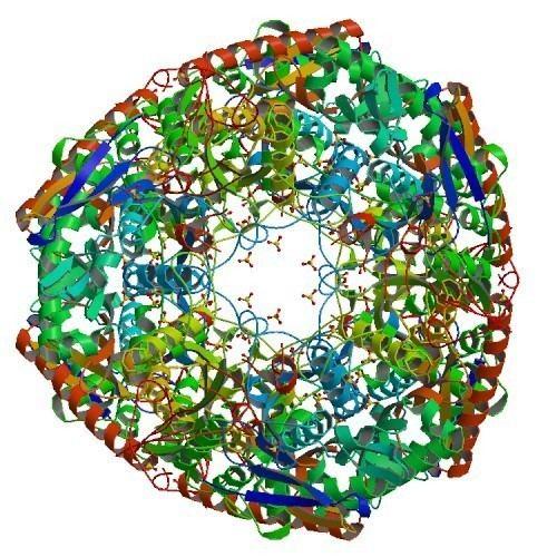 Polynucleotide phosphorylase