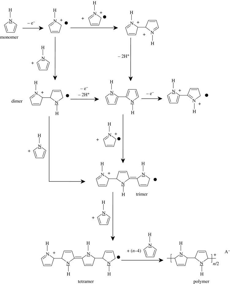 Polypyrrole Polypyrrolebased conducting polymers and interactions with