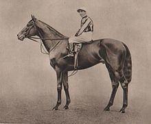 Pommern (horse) httpsuploadwikimediaorgwikipediacommonsthu