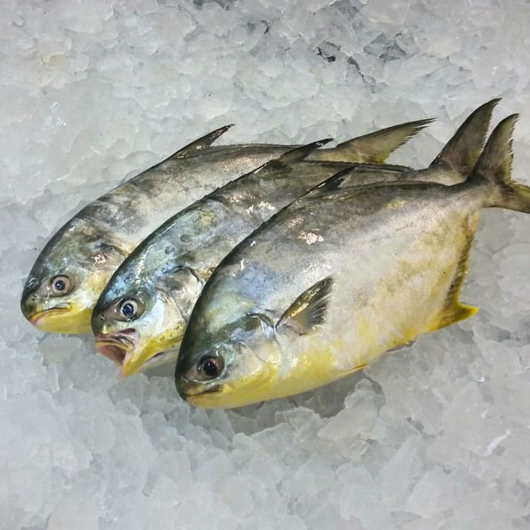 Pompano Pompano Inland Seafood