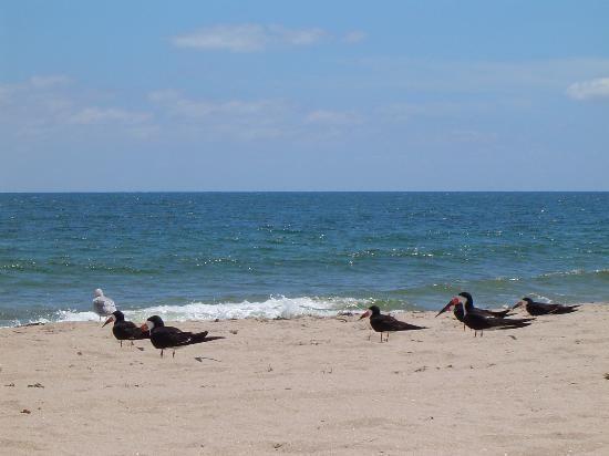 Pompano Beach, Florida Culture of Pompano Beach, Florida