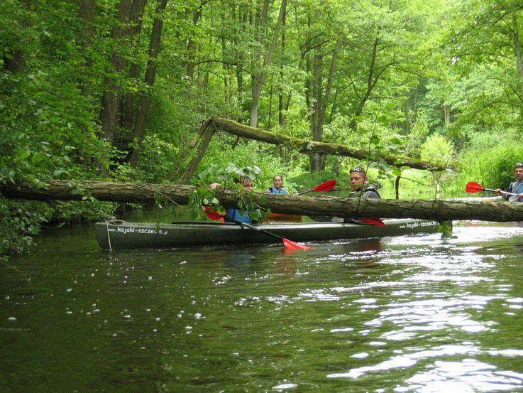 Płonia (river) wwwkajakiszczecinplgaleriaploniaczerwiec201