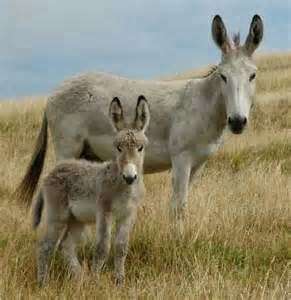 Ponui donkey 4bpblogspotcom6fevQRgc2K8UkIhG4iXTWIAAAAAAA