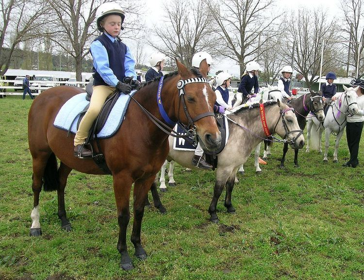 Pony Club Association of New South Wales