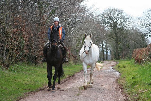 Ponying