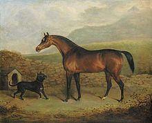 Pope (horse) httpsuploadwikimediaorgwikipediacommonsthu