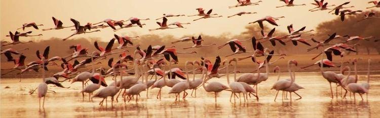 Porbandar Bird Sanctuary Porbandar Bird Sanctuary in Gujarat