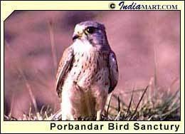 Porbandar Bird Sanctuary Porbandar Bird Sanctuary Wildlife in Gujarat Gujrat Wildlife Tours