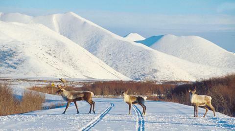 Porcupine caribou Porcupine Caribou Herd Interim Measures