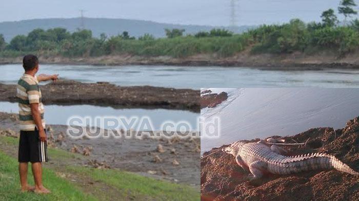 Porong River cdn2tstaticnetsurabayafotobankimagesbuayas