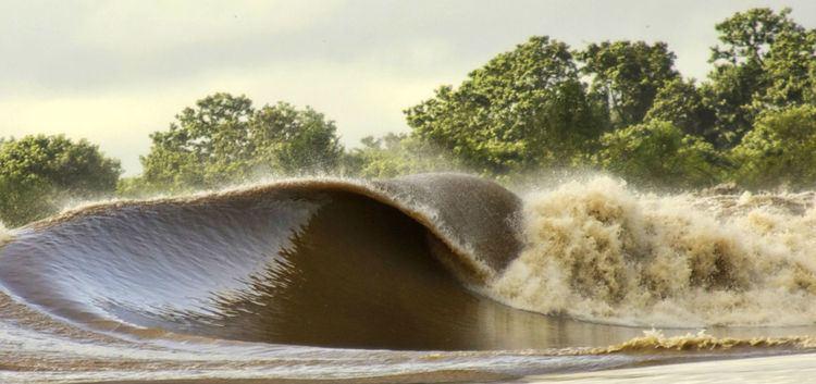 Pororoca Pororoca Phenomenon Amazon tidal bore Brazil Trip Specialist